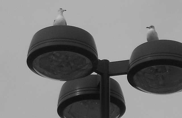 Paradox of Seeing #09 - Avian Discourse