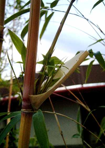 Tranquility #13 - Bamboo Cradle